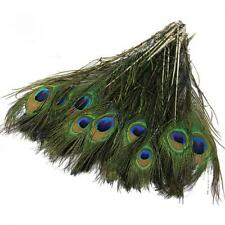 100pcs Lot Real Natural Peacock Tail Feathers eyes About 10-12 Inches 25-30cm US