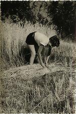 PHOTO ANCIENNE - VINTAGE SNAPSHOT - FEMME CHAMP VANNERIE FOIN TRAVAIL - FARMER