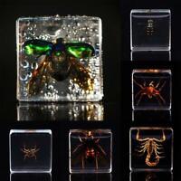Insecte Figure Modèle Jouet Échantillon Créatif Résine Spécimen Enfants