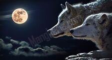 Quadro legno 59 x 32 cm stampa in alta qualità fantasy lupi chiaro di luna piena