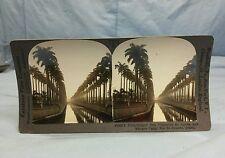 Antique Keystone Stereoview Card #21859 Palm-Fringed Rua Visconte De Itauna