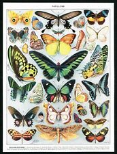 1928 Exotic Butterflies, Greenwing, Insects, Antique Entomology Print, Larousse
