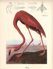 Flamingo Art Print by John James Audubon