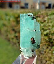 ! MUZO ! EMERALD crystal & Pyrite SMARAGD Kristall Boyaca Kolumbien Colombia ze