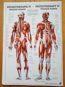 Osteopathie, Physiotherapie, Trigger Punkte, TCM, Akupunktur, Akupressur