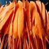 90 x Leuchtende Orange Federn Echte Hühnerfedern Federkiel Vogelfedern Gefärbte