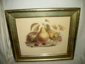 BORGHESE FRENCH FRUIT BIRD NEST PRINT ETCHING PALE GILT WOOD FRAME MID CENTURY