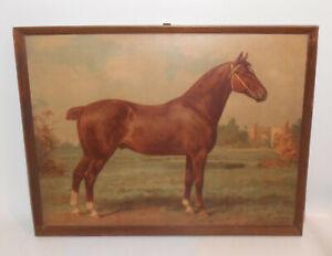 Richard Schoenbeck Otto Eerelman Cavallo Rassepferd Stampa Vintage Stampa Telaio