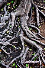 "Neil Reichline Photo ""Roots""  Yosemite"
