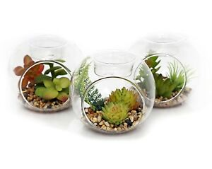 Artificial Succulent Plants In Glass Tealight Candle Holder Set Of 3