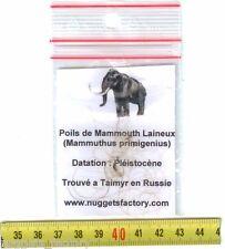 veritable poils de Mammouth laineux ( 003 )