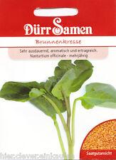 Brunnenkresse Wasserkresse Nasturtium officinale winterhart 1000 Korn Dürr Samen