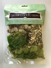Miniature FAIRY GARDEN Terrarium ~ Small Variety Pack Preserved Moss