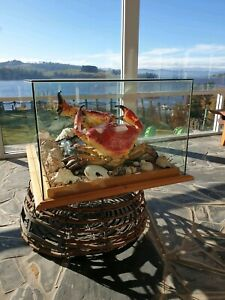 Giant Tasmanian crabs, taxidermy in glass case and cray pot stand