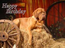 Dogue de Bordeaux Dog A6 Textured Birthday Card BDDOGUEDEBORDEUAX-4 paws2print