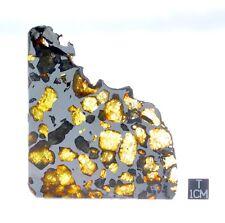 Esquel Pallasite 52.80g slice! Stunning Olivine Crystals