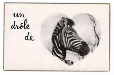 """CARTE PHOTO ANCIENNE """"Un drôle de zèbre"""" vers 1960 Curiosité Drôle Coeur"""