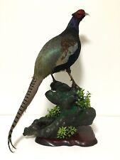 stuffed animals Japanese, Japan,beautiful Real Bird pheasant taxidermy 彩