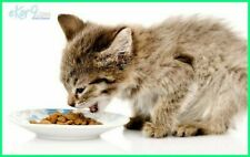 cat dry healthy food.Yummy yummy about 10.5 Ounce/300gram ocean fish flavour