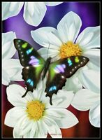 Butterfly Flowers - Chart Counted Cross Stitch Pattern Needlework Xstitch Craft