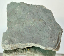 LARGE Ediacaran Precambrian fossil Medusoid Nemiana simplex plate #11648 UKRAINE