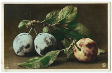Carte photo peinte / nature morte aux prunes vers 1910 étude de Fruit
