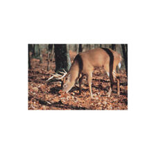 Delta True Life Paper Archery Target Whitetail Deer Feeding #102 - Single