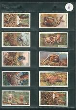 W.D & H.O Wills Life In The Tree Tops 50 Cards in Sleeves 1924 Good