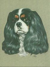 Sale James, a Tricolor Cavalier King Charles Spaniel blank note card