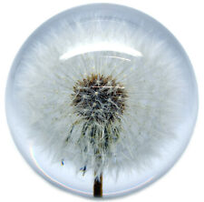 Large Dandelion Paperweight made with a real flower