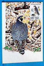 FAUCON PELERIN RAPACE FRANCE CPA Carte Postale Maximum Yt 23XX C