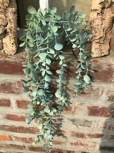 IKEA FEJKA Topfpflanze,künstlich,hängend/Eukalyptus, 9 cm Kunstpflanzen Pflanzen