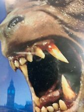 An American Werewolf in London Collectors Edition Vintage New Halloween Horror
