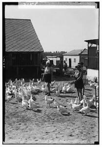 Zionist colonies on Sharon,Borochov,Girls' farm,Israel,Middle East,c1925 7419