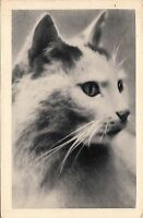 B81377   cat chat front/back image