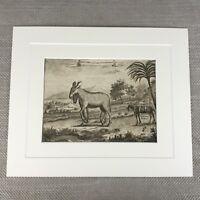 Antico Originale Incisione Zoology Stampa 18th Secolo Nathaniel Parr Zebra Capra