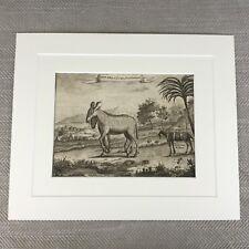 Rare Zoology Print 18th Century Engraving Nathaniel Parr Wild Zebra Goat