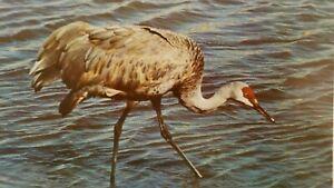 """SANDHILL CRANE BIRD US Department of Wildlife Portrait 14X17"""" Ready Frame"""