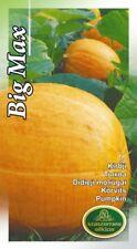 Vegetable Seeds Pumpkin Big Max Garden EU Standart Seeds Pictorial Packet UK