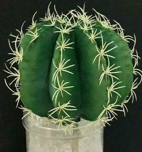 "Barrel Cactus Pick~Green, Cream~Artificial/Foam/PVC~5"" Round x 7"" Tall"