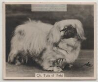 Pekinese - Pekingese 1930s Champion  Dog Breed Canine Pet Ad Trade Card