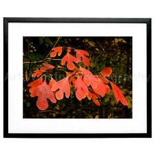 "Fine Art Photography Print ""Brilliant Foliage 2"" Limited Edition Archival Paper"
