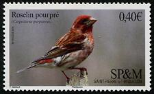 Purple Finch mnh stamp Saint Pierre & Miquelon 2016 bird roselin pourpre