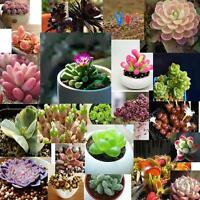 60pcs Succulents Seeds Potted Flower Seed Home Garden Office Decorative hot YY