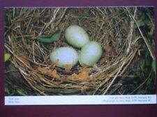 POSTCARD D5-8 BIRDS NEST WITH 3 EGGS