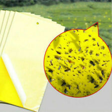 10Xsticky Yellow Fly Trap Paper Fruit Flies Insect whiteflies aphid Glue Catcher
