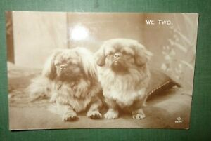 Vintage RP postcard  Pekingese dog's. WE TWO  JV  1924 LG