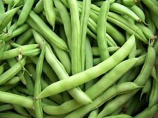 Heirloom Old Dutch White 1/2 Runner Bean Seeds 1/2 lb about 400 seed