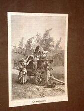 Moda e costume in Italia nel 1884 Vendemmia o raccolta dell'uva Vino
