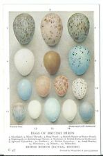 Eggs of British Birds Artist Drawn H Gronvold PPC #C47 Waterlow & Sons Unused